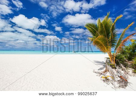 Stunning tropical beach with palm trees, white sand, turquoise ocean water and blue sky at Cook Islands, South Pacific