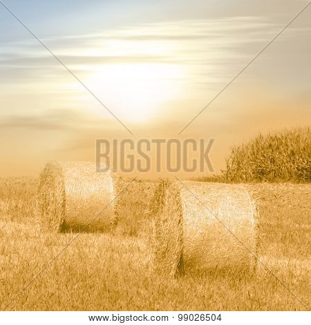 Late summer field with hay bales in warm sunlight - photo with soft oil paint filter - autumn concept