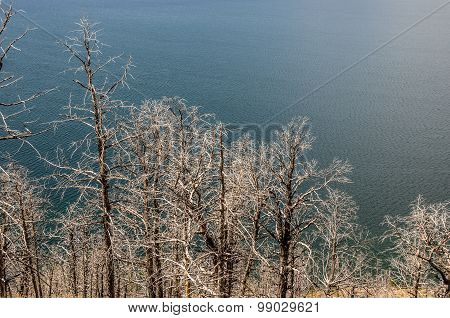 Bare Trees Along A Lake