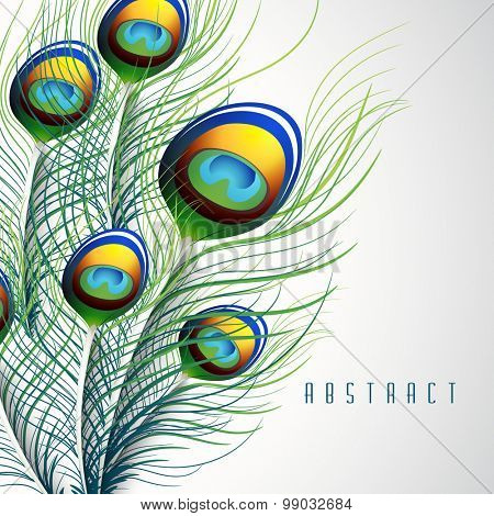 Colorful peacock feather on stylish background.