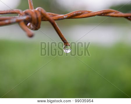 Close Up Rusty Barb Wire Fence With Drops Of Water.