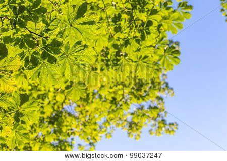 Green Leaves Treetop With Blue Sky Background Vertical