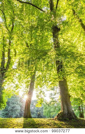Green Forest Treetop With Sunrays Horizontal