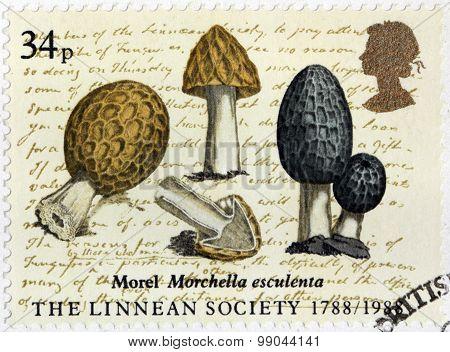 Morel Stamp