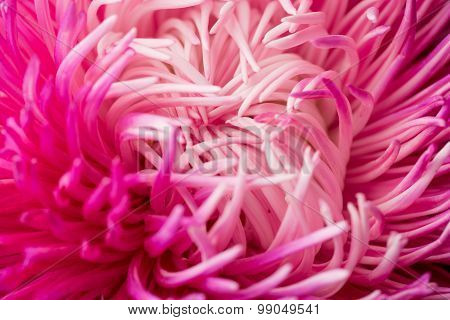 Abstract Flower background. Macro photography