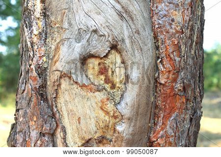 heart shape carved in the bark of a tree