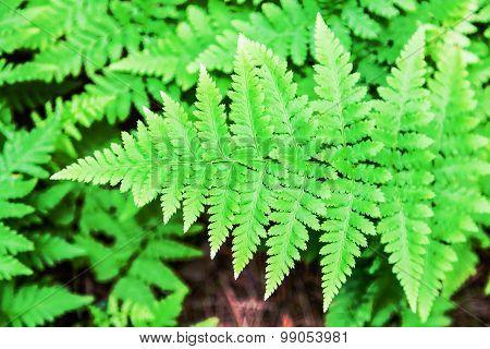 Green Fern Leaf Shot Close