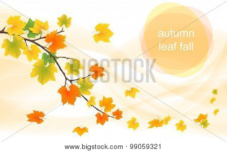 Autumn Vector Background With Deciduous Leaves
