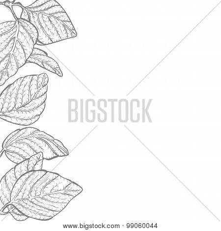 Leaves Border