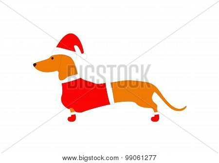 Dachshund Wearing Christmas Suit
