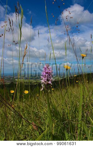 Insect's View of a Landscape with Spotted Orchid.