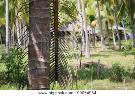 The Trunk Of The Palm