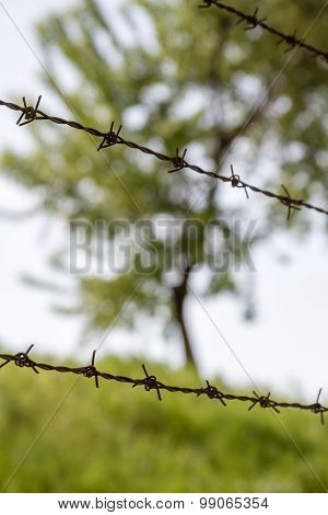 Green Tree Behind Barbed Wire