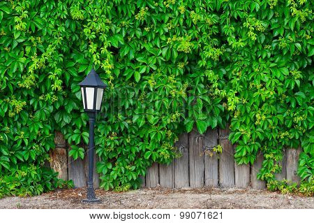 A Fence Made Of Wood, Vines And Lantern
