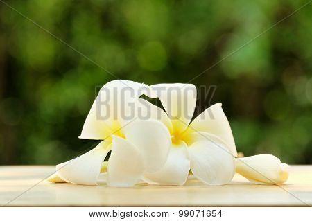 Frangipani Flowers On Green Blur Bokeh Background