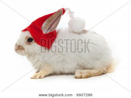 Rabbit And Red Hat