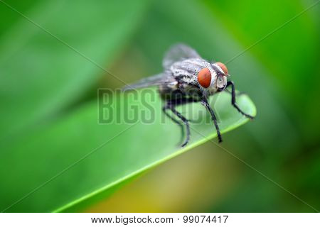 Macro view of fly