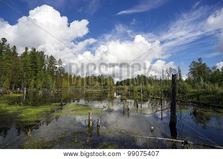 Northern landscape with boggy lake.