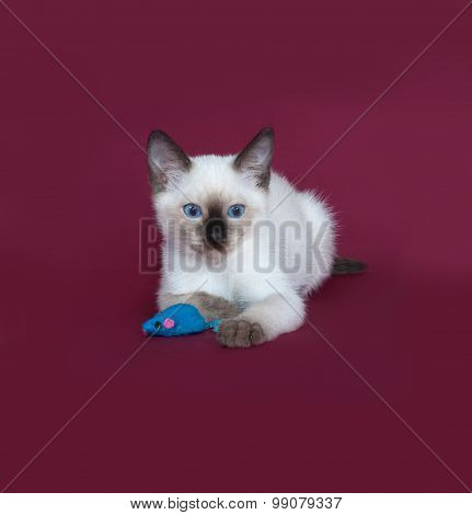 Thai White Kitten Lies On Burgundy