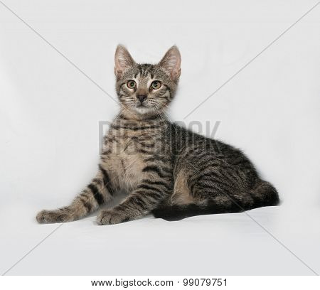 Grey Tabby Kitten Lying On Gray