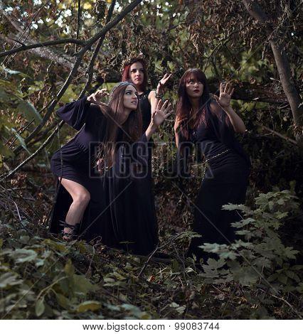 Witches In Dark Forest