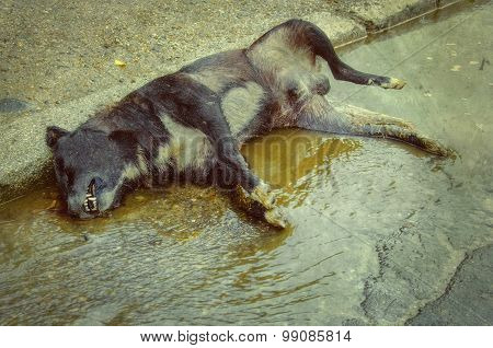 Dead dog on a puddle