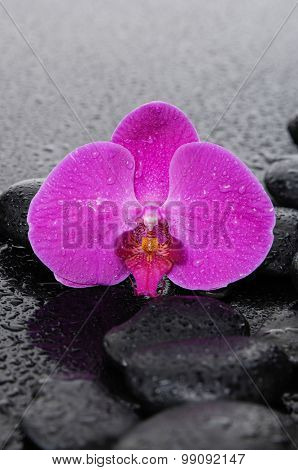 Wet stones and macro of red orchid