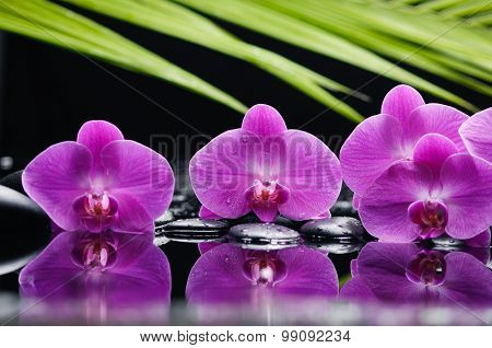 Still life with three orchid and bamboo leaf ,black stones