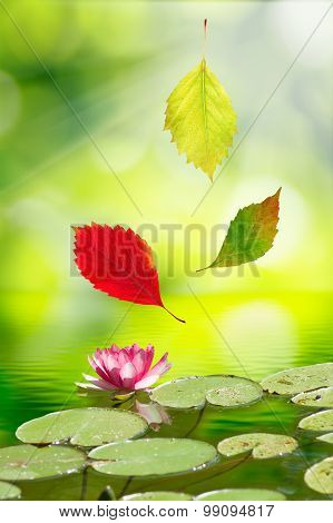 image of falling autumn leaves on the lotus flower background of water closeup