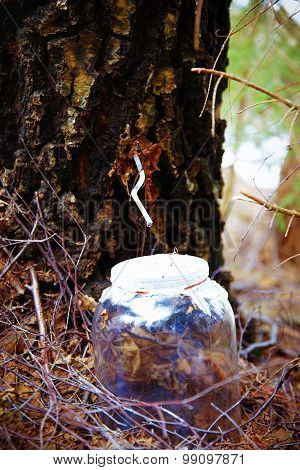 drop birch juice. water of birch sap.