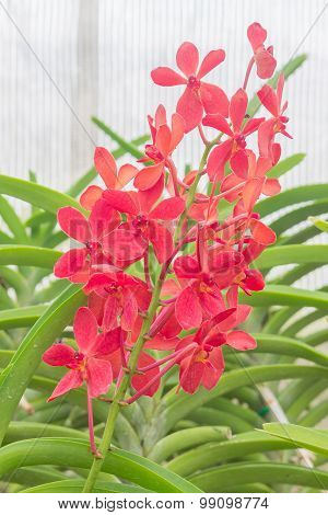 Beautiful Orchid in the garden