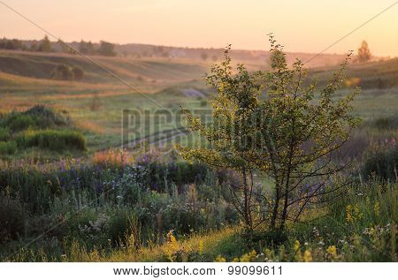 Green Grass Hills With Small Trees In Summer Sunrise