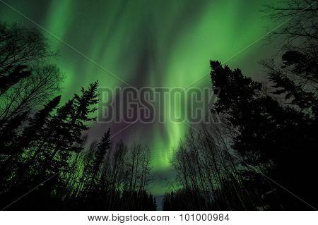 Aurora, Night Sky At Alaska, Fairbanks