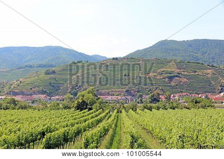 Vineyards, Lower Austria