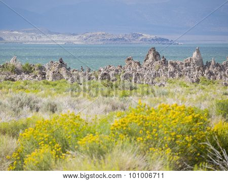 Tofu, Mono Lake With Yellow Wild Flower In Front