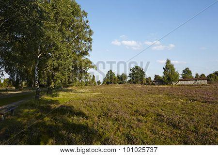 Luneburg Heath - Heathland
