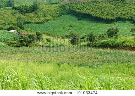 Green, Agriculture Plant, Vast Field