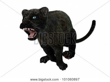 Big Cat Black Panther