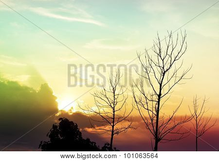 Colorful sky and Tree branches backlit - vintage style