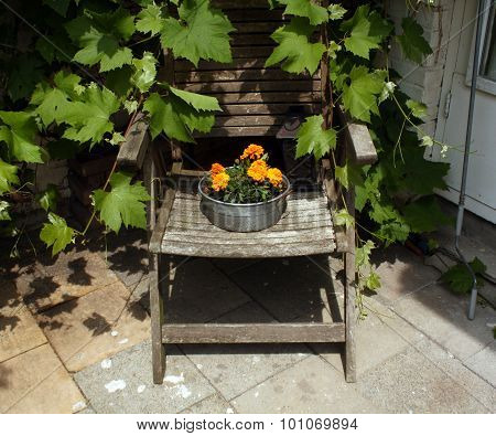 Flowers On Old Chair.