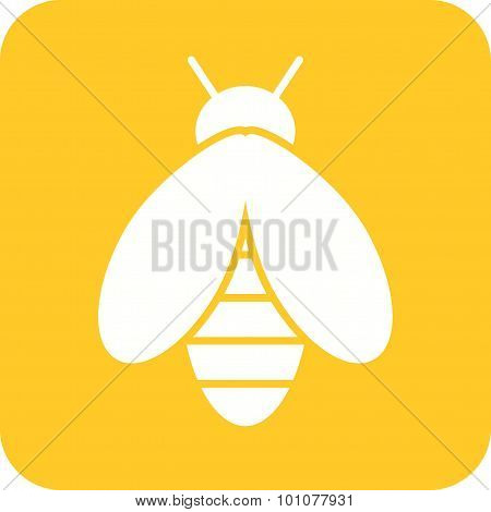 Bee , Insect