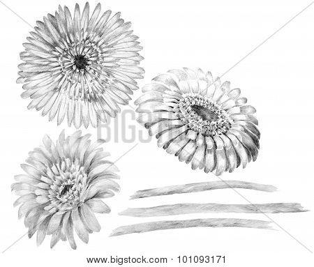 Flower sketch bouquet