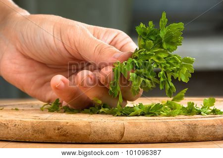 Hand With Parsley Prepared For Chopping