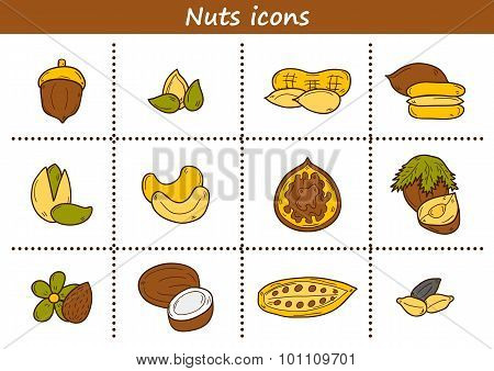 Set of cartoon hand drawn objects on nuts theme: hazelnut, pumpkin and sunflower seeds, peanut, peca