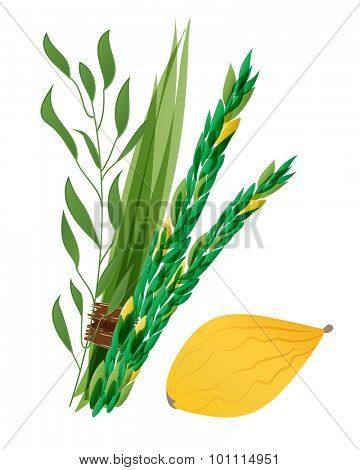 Vector illustration of four species - palm, willow, myrtle , lemon - symbols of Jewish holiday Sukkot. Holiday of Sukkot illustration.