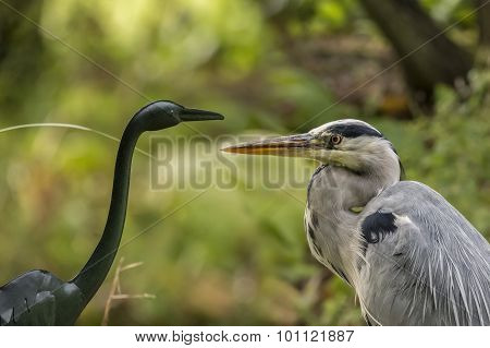 Grey Heron standing next to a Heron statue