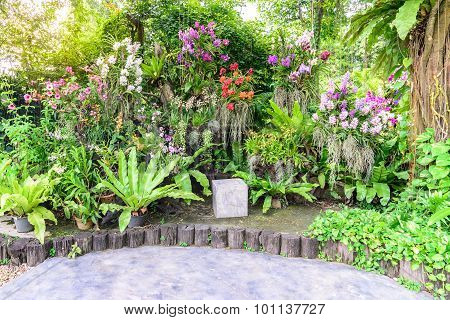 Stone Seat Stool Among The Beautiful Orchid Garden.