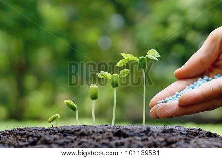 growing baby plants