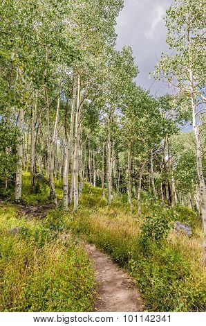 Path Through The Aspen