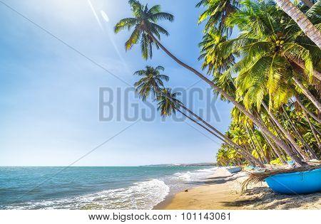 Beachside coconut sunny summer day in Binh Thuan